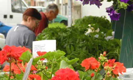 Najava: Sajam cvijeća u Nedelišću