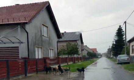 Pripazite na svoje pse, vlasnicima kazne i do 2.000,00 kn