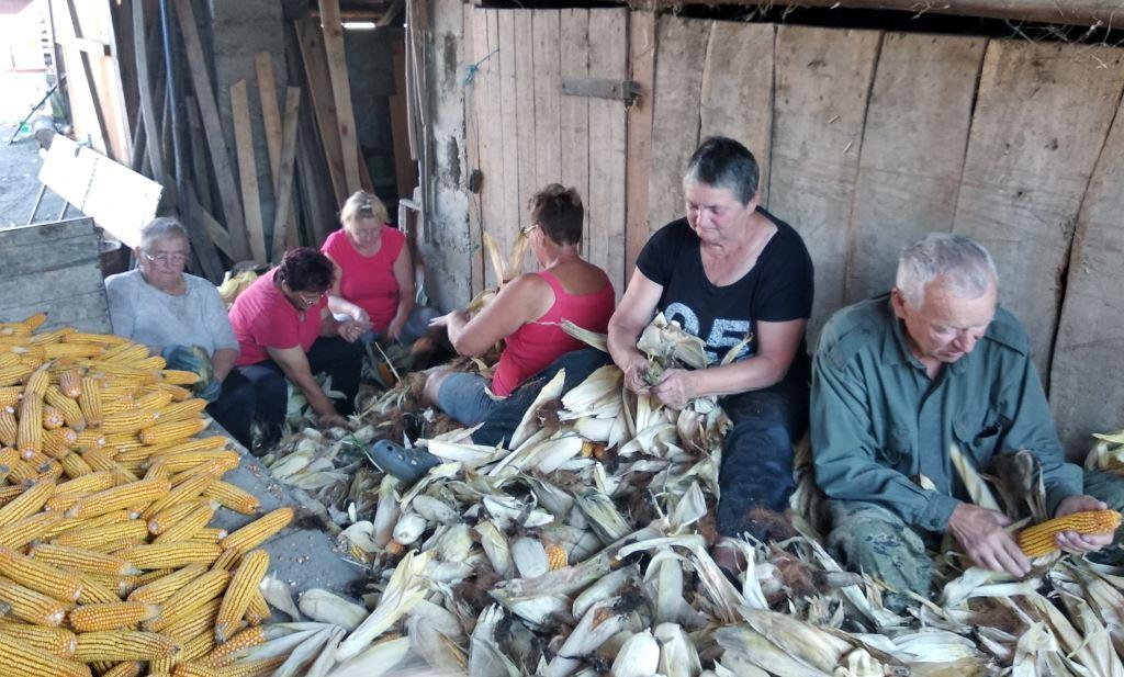 Udruga žena Pušćine uprizorila ručno branje kukuruza