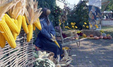 Fotogalerija: Z domačega vrta