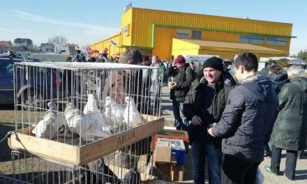 Najava: U nedjelju sajam malih životinja na Mesapu