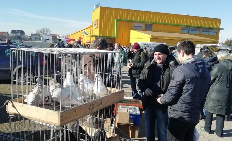 Najava: Prvi proljetni sajam malih životinja u Nedelišću