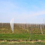 Prijave štete od prirodne nepogode mraza u općini Nedelišće