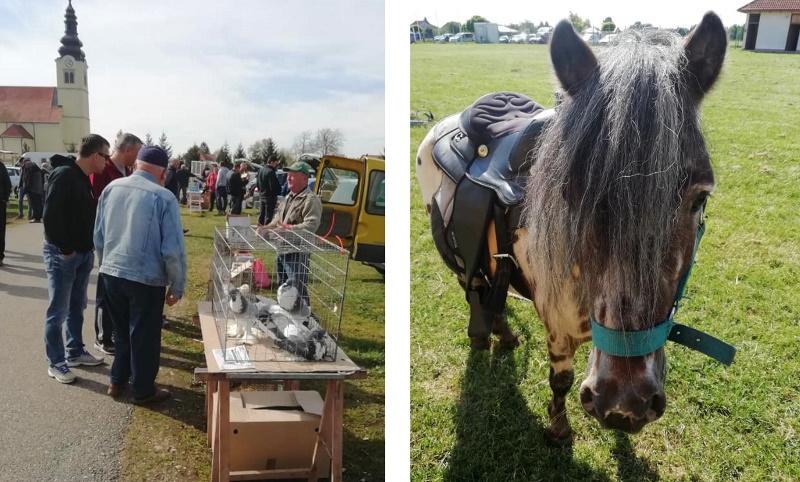 U nedjelju pokazno-prodajna izložba malih životinja